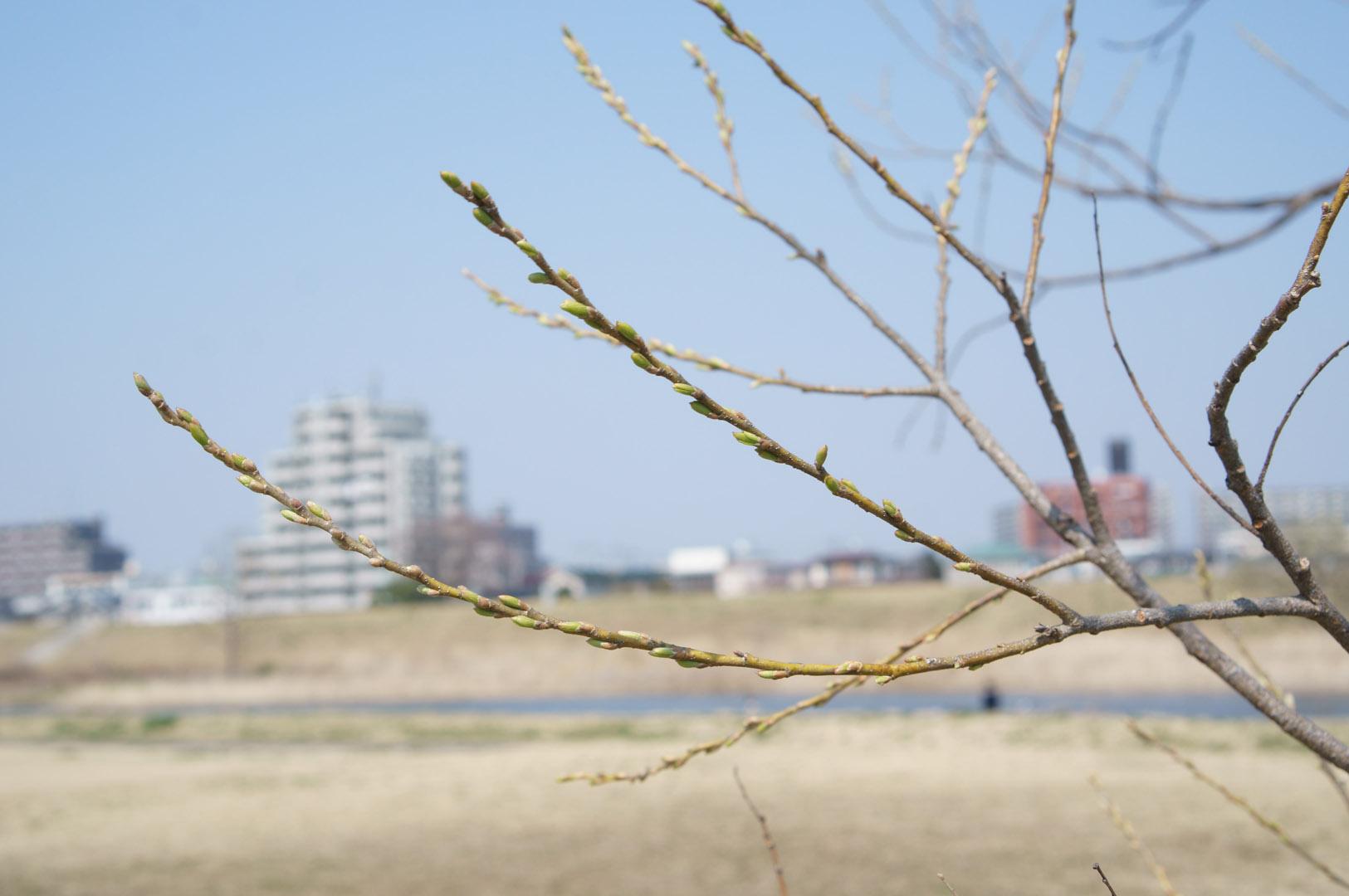 写真撮影日記001 05