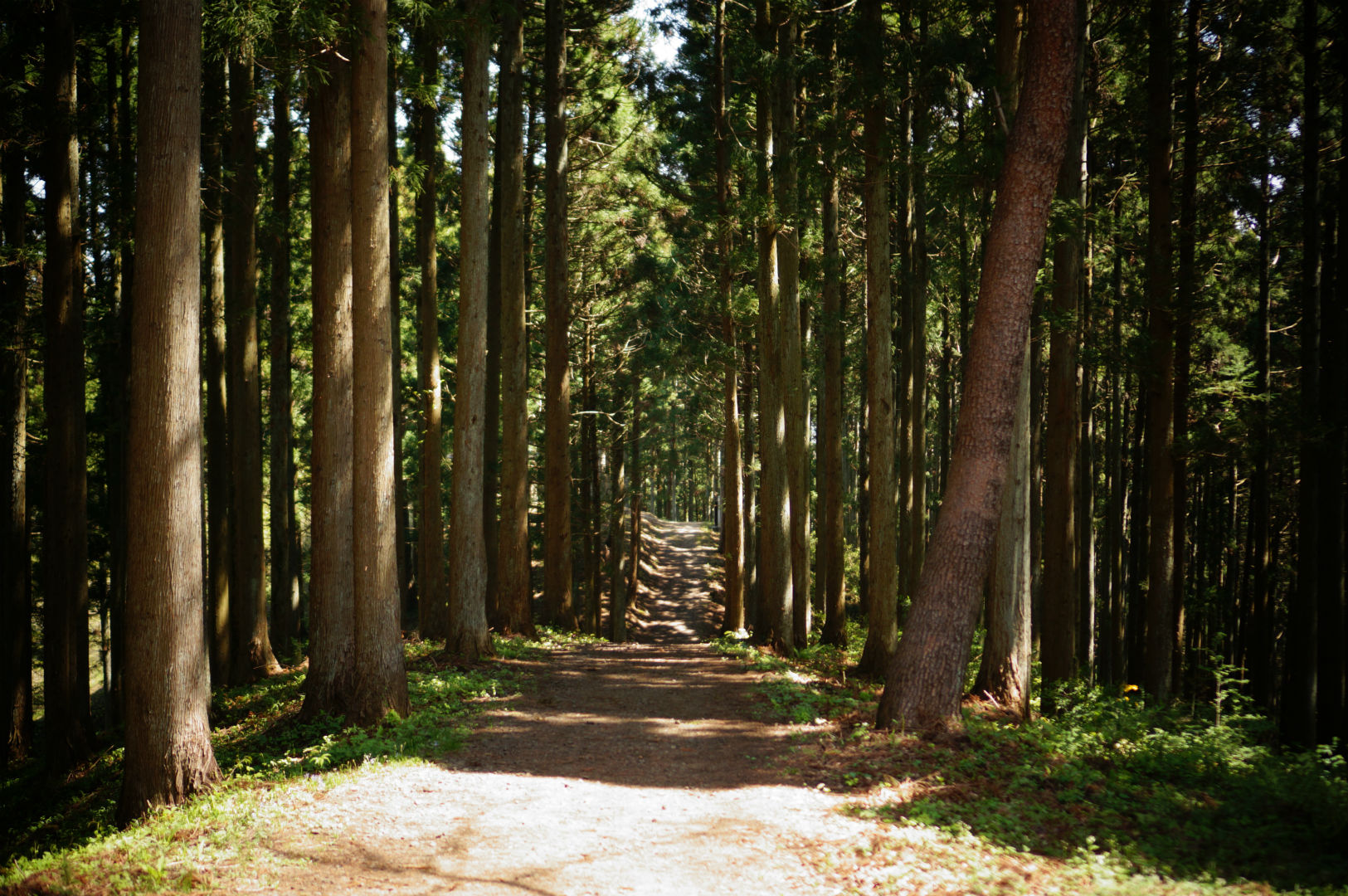 写真撮影日記004 林道