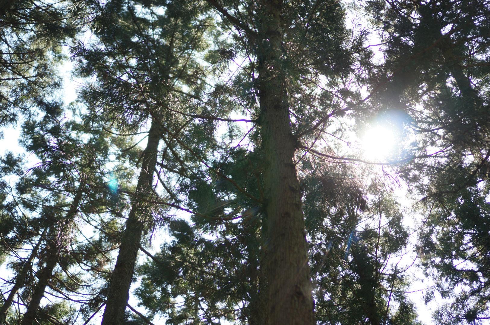 写真撮影日記004 林道2