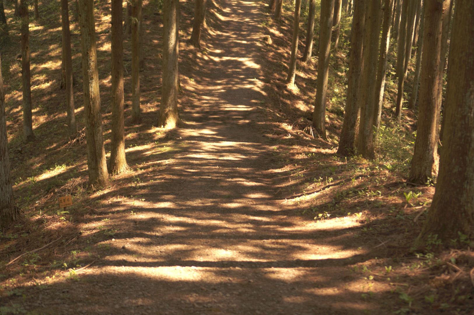 写真撮影日記004 林道4
