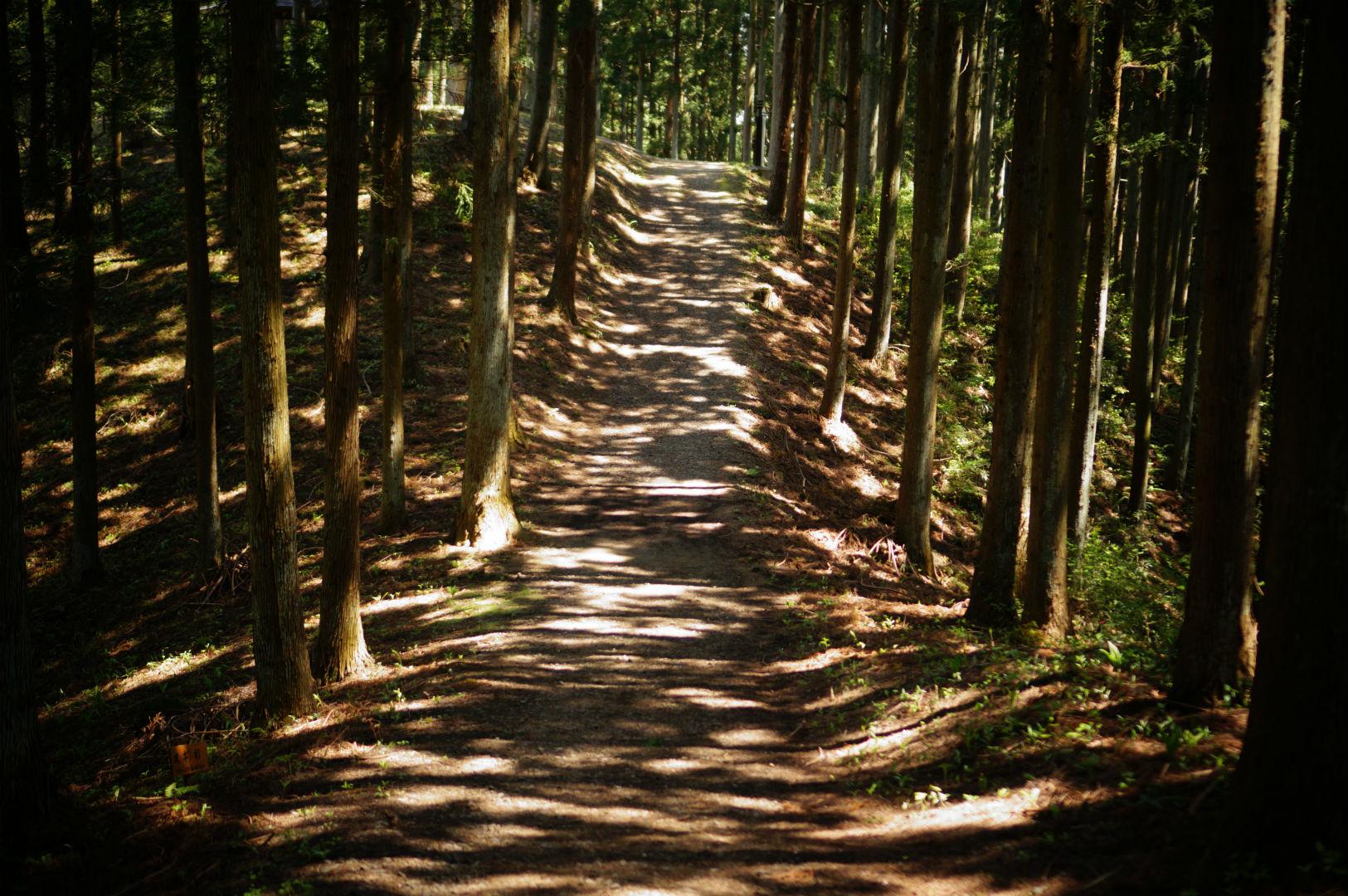 写真撮影日記004 林道5