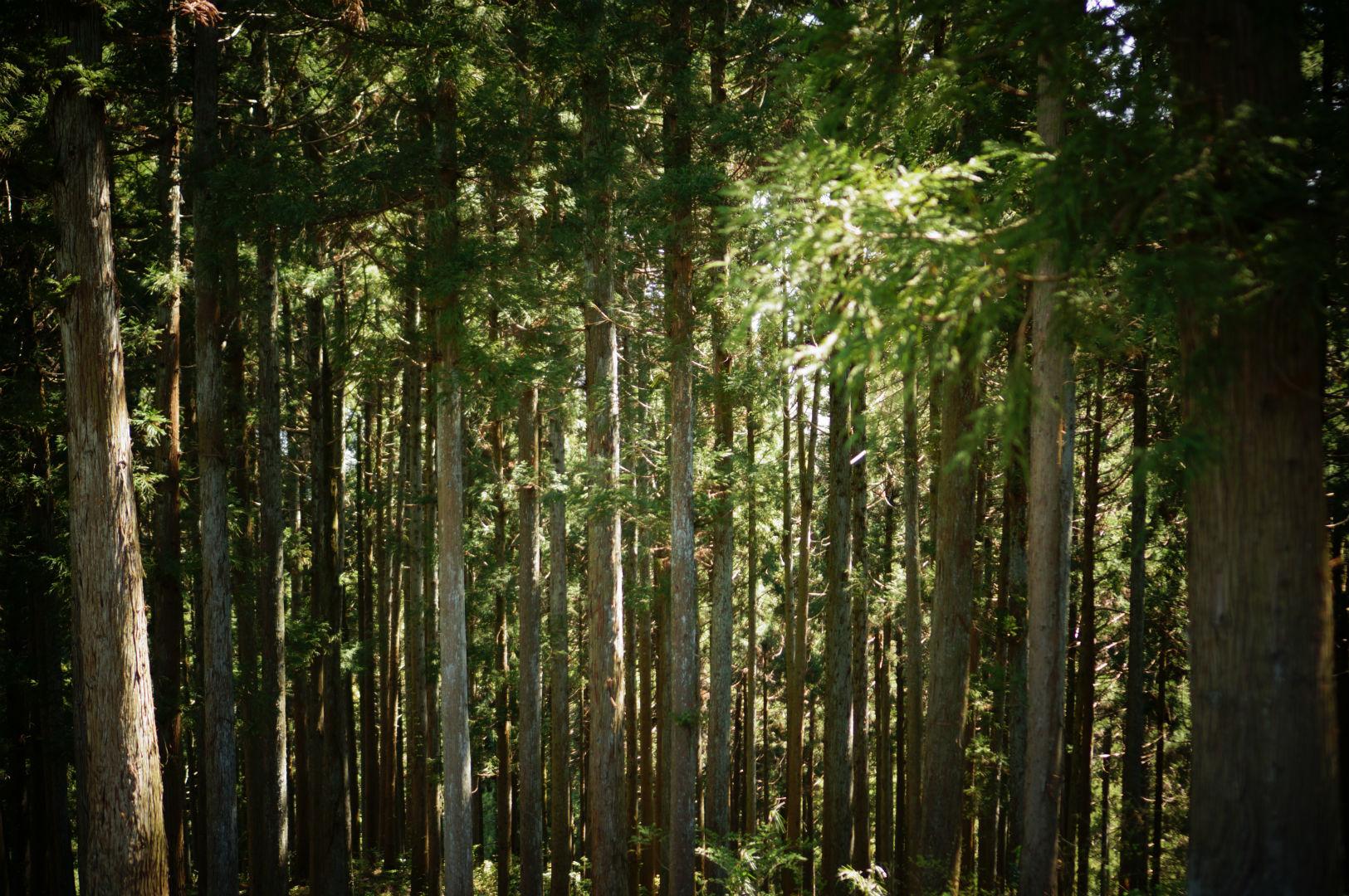 写真撮影日記004 林道6