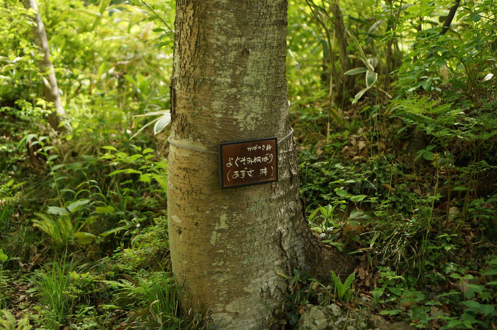 写真撮影日記006 野草園