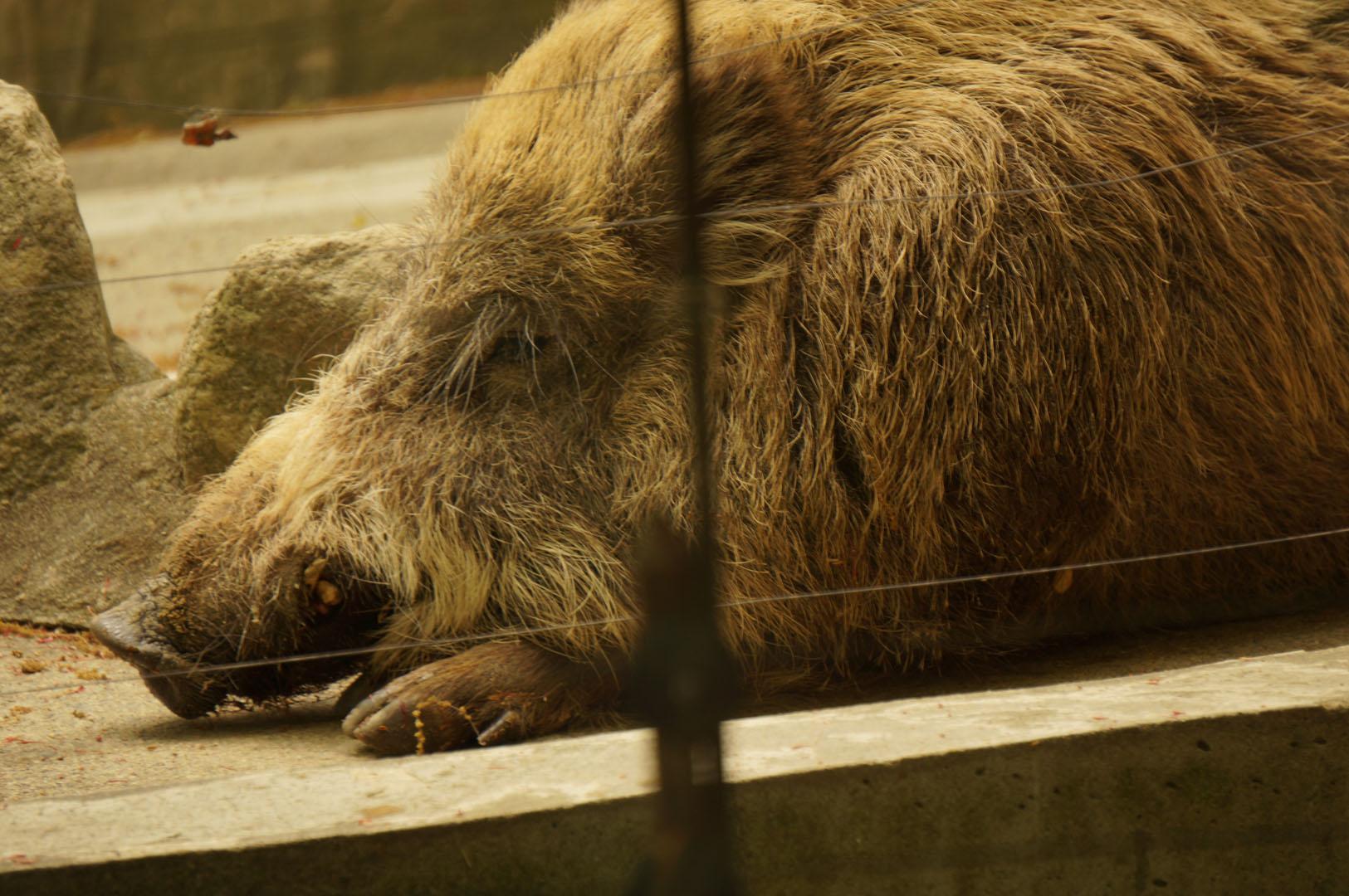 写真撮影日記007 八木山動物園 前半