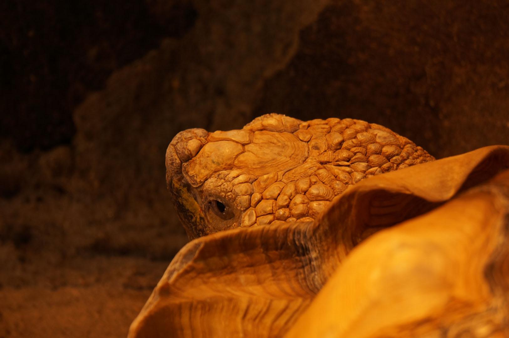 写真撮影日記008 八木山動物園 後半