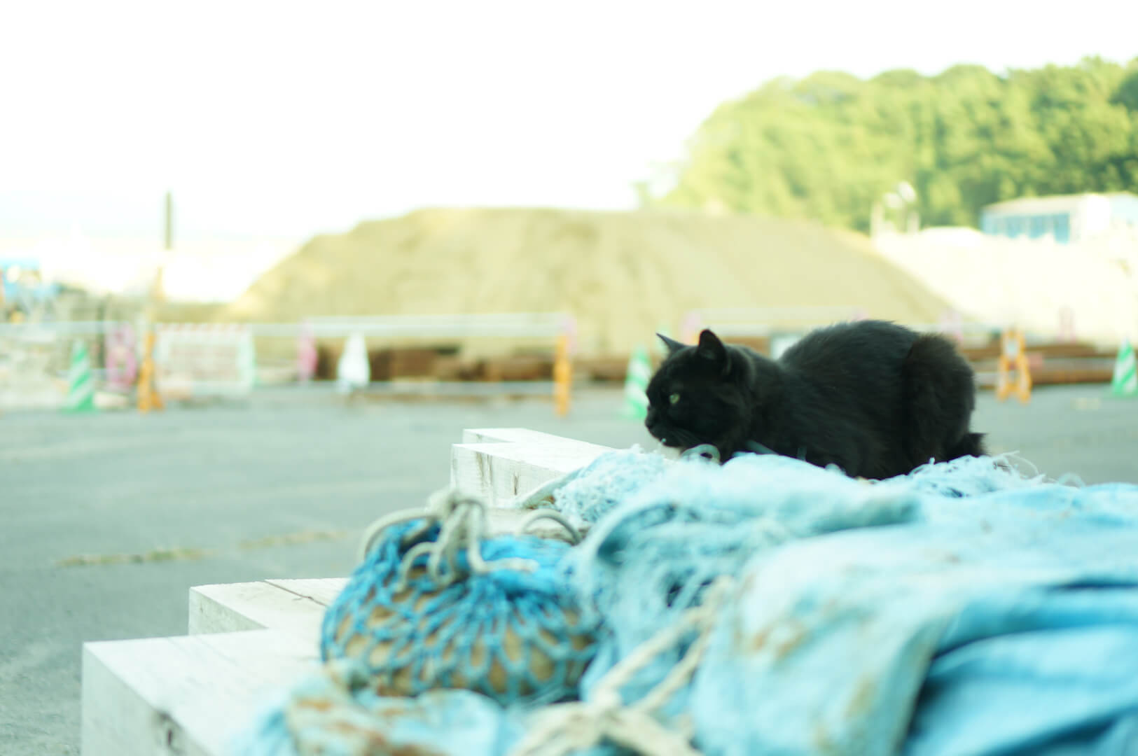 写真撮影日記009 網地島・田代島・猫島